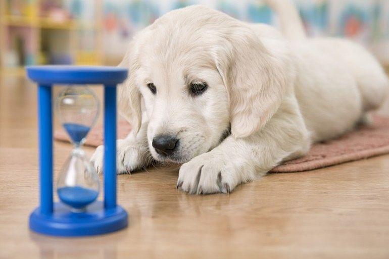 小型犬・中型犬が飼育可となってます!(敷金1ヶ月分追加です。)
