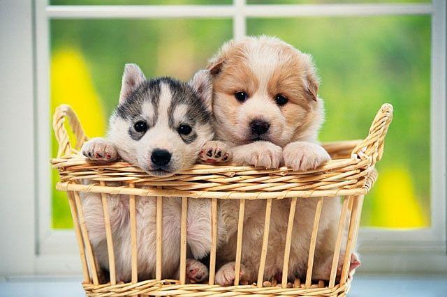 ペットも大切な家族の一員。小型犬と中型犬のみになりますが、ペット可物件です。(飼育する場合、敷金1ヶ月分必要になります。)