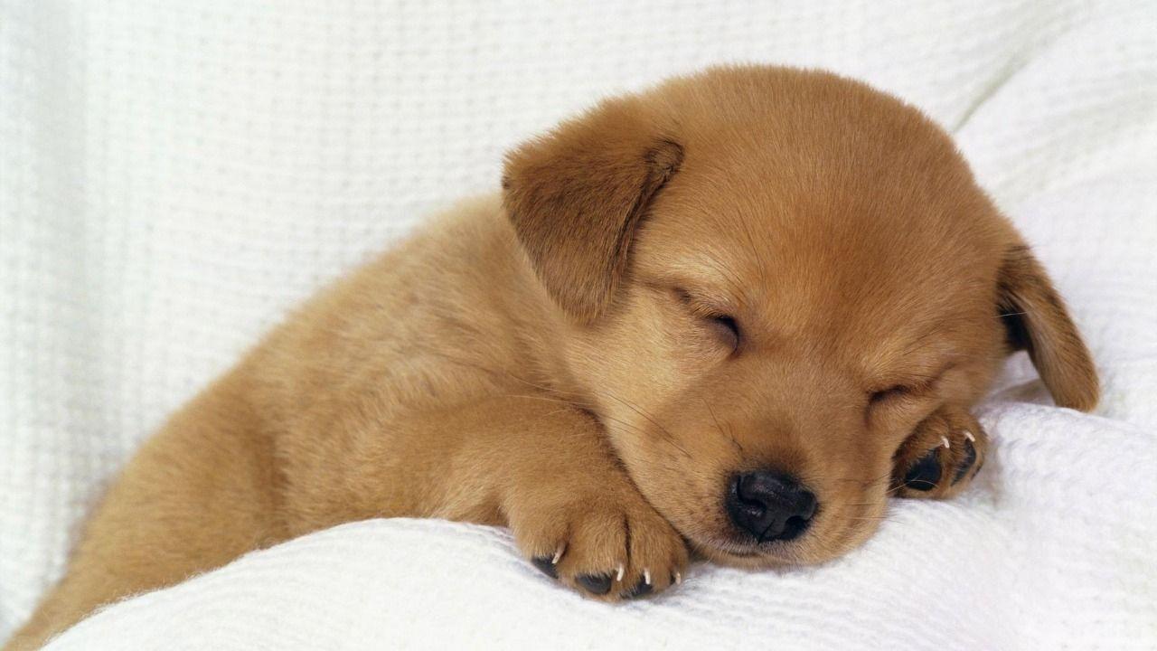 小型犬のみですが、飼育可能です。(敷金1ヶ月分が追加で必要となります)