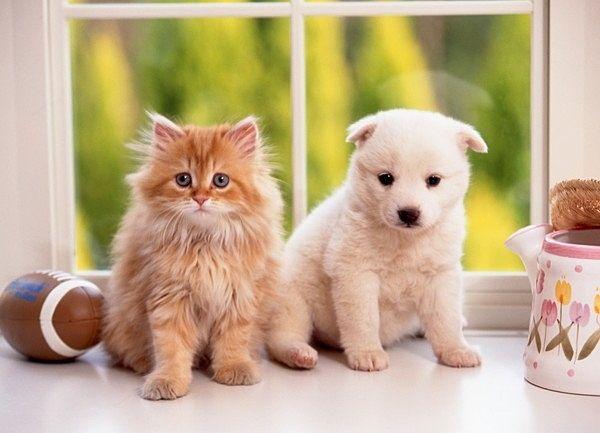 犬・猫どちらでも2匹まで飼育可能です。