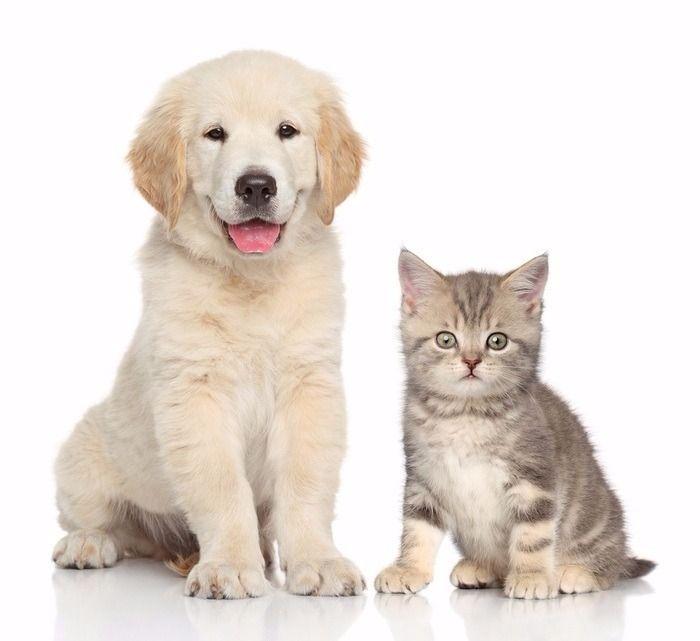 ワンちゃん、ネコちゃんどちらでも1匹飼うことが出来ます。飼育希望の場合はワンちゃん・ネコちゃんの写真と敷金0.5ヶ月追加(合計2ヶ月分)となります。