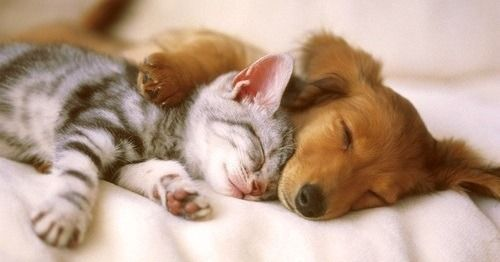 犬・猫どちらか1匹のみ飼育可能です。