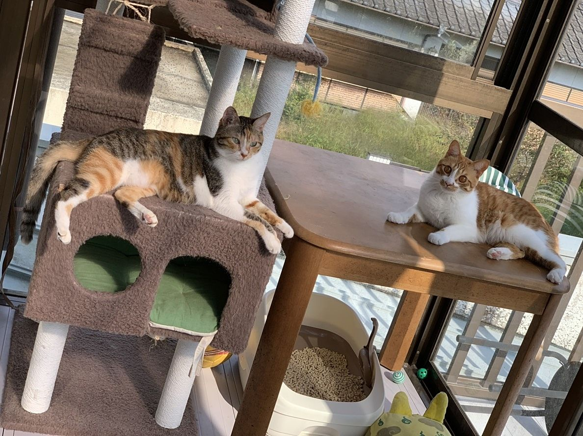 我が家の猫たち。