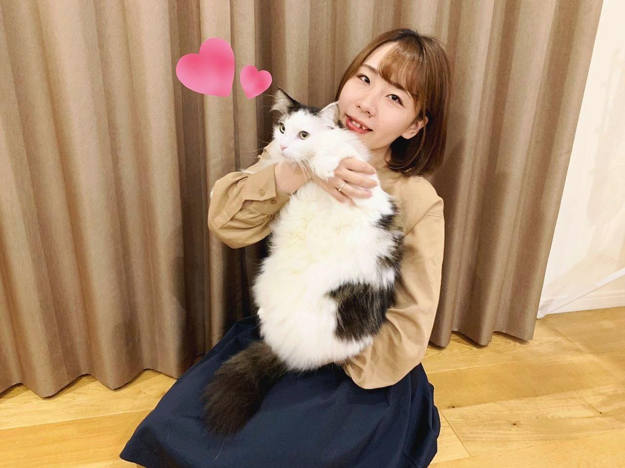 賃貸で猫を飼いたい!その際に注意するべき事とは。