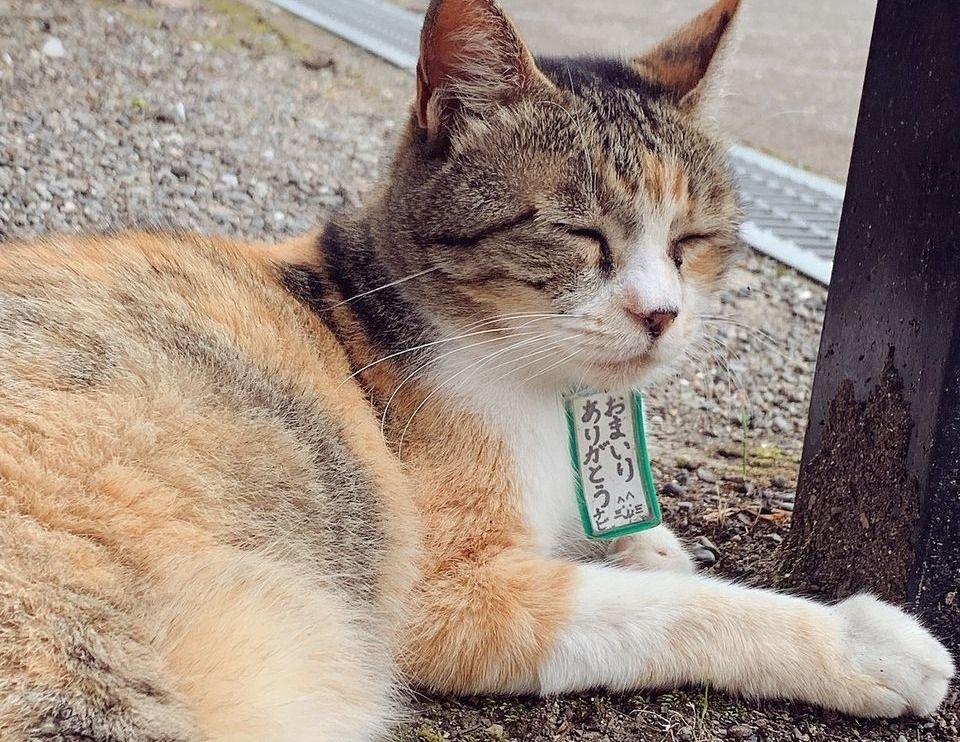 一條神社の看板猫「ちびちゃん」