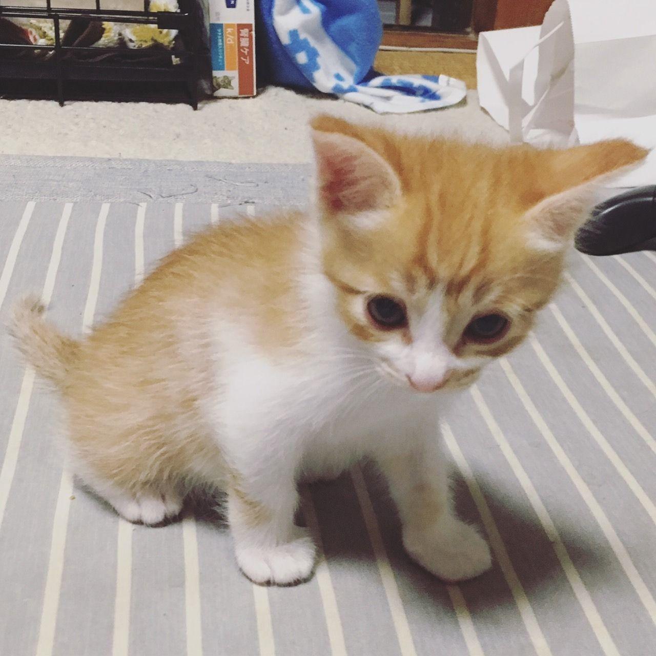 【雑談】子猫の成長記録【自己満】