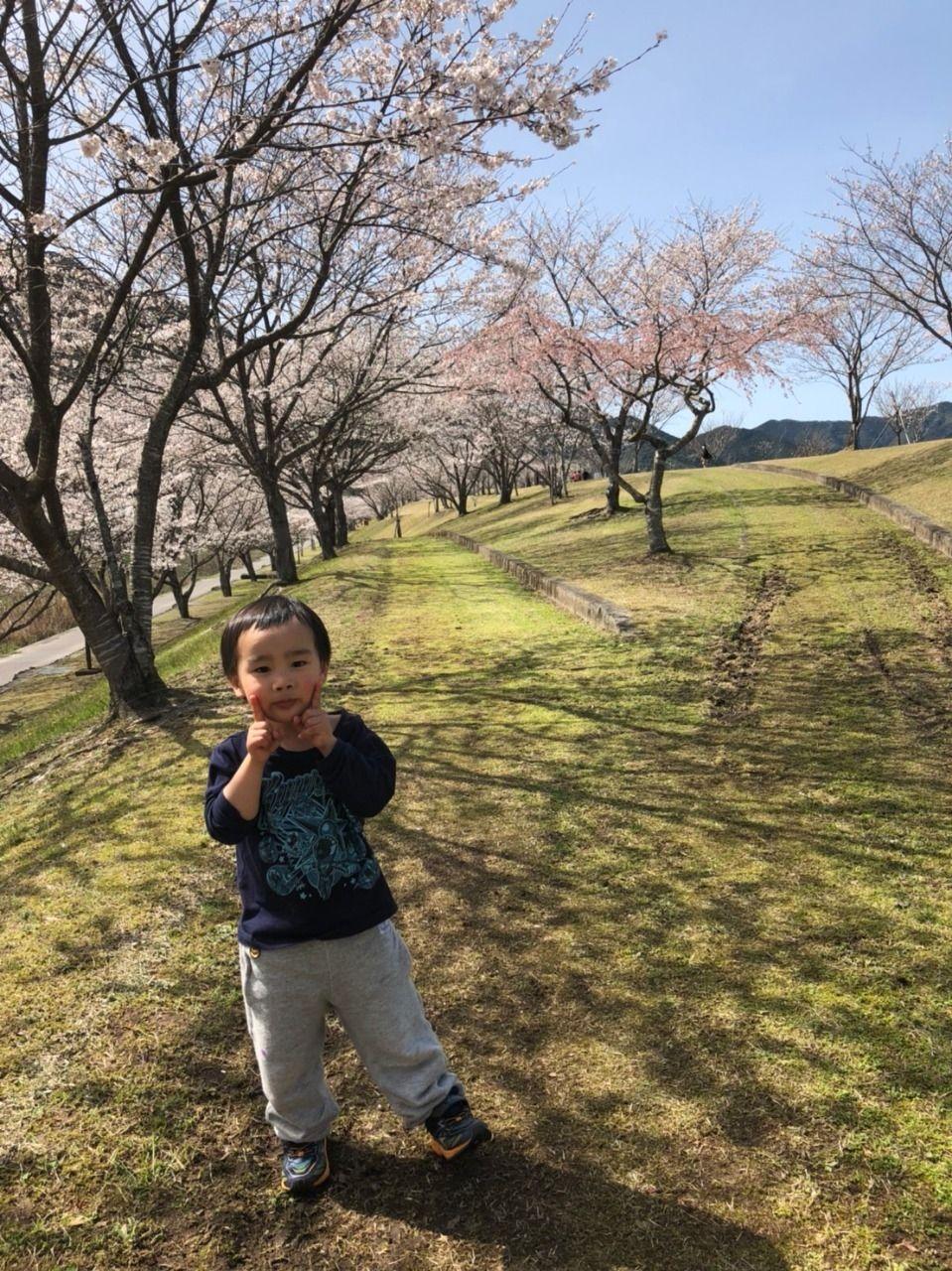 四万十市の桜・今が見頃です