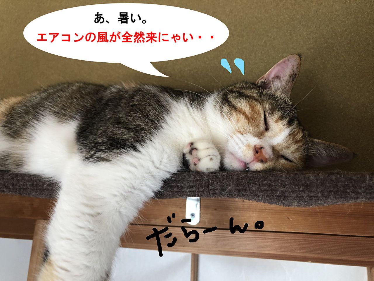 エアコンの風が来なくてヘトヘトの猫
